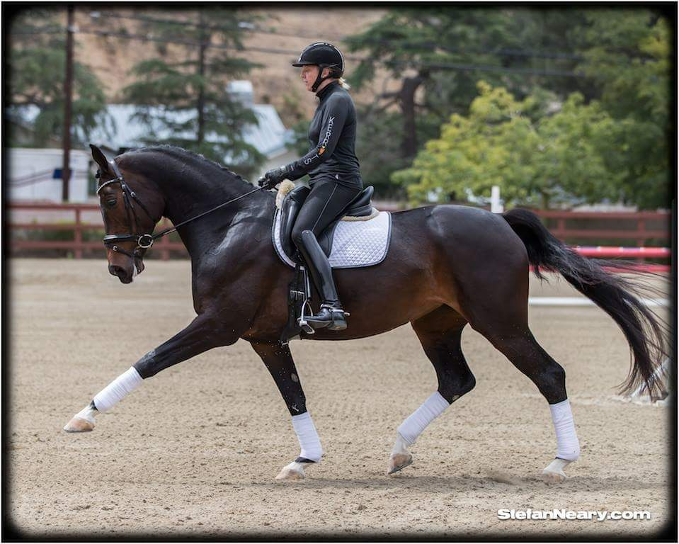Dressage Moments 8